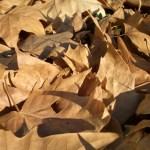 Como evitar a queda de cabelo sazonal no outono?