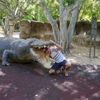 Fütterungszeit des Krokodils!