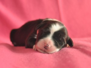 Pup 6 - teefje Roze - 356 gr