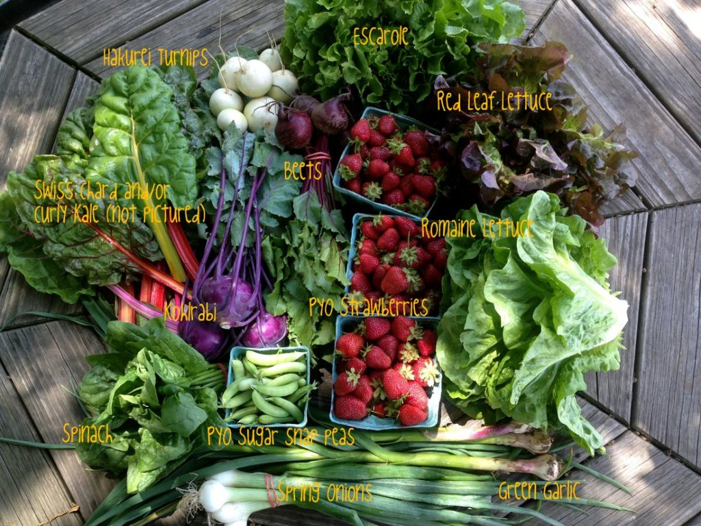 CSA on-farm share, week #2, 6/7/16.