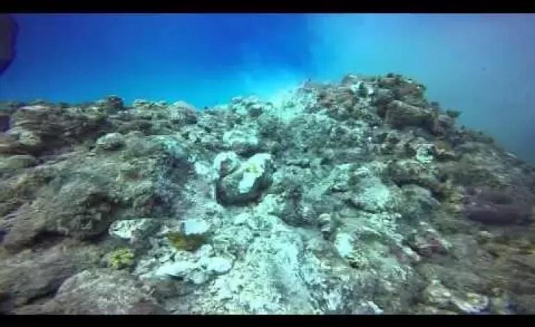 Jak wygląda rafa koralowa po zrzuceniu kotwicy przez statek wycieczkowy?