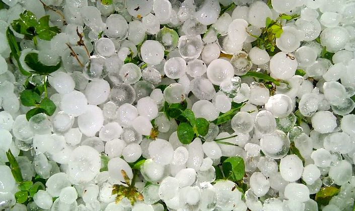 HT-Berry-Hail.jpg