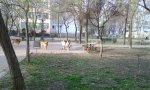 caini-parcul-voievozilor-iasi-01