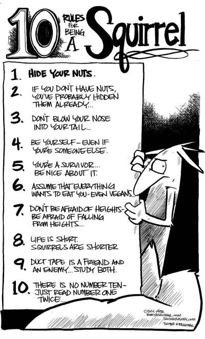 10 rules for being a squirrel