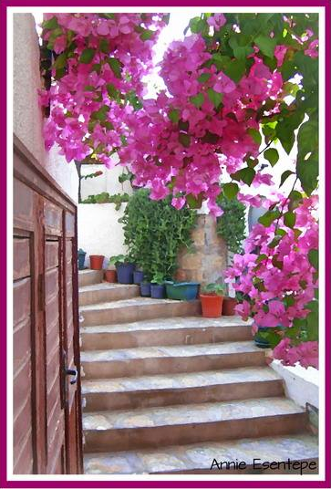 "Top 10 ""Wandering the Back Streets of Bodrum"" Photo Gallery"