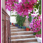 Annie from Bodrum and Beyond Photography Back Streets Bougainvillea