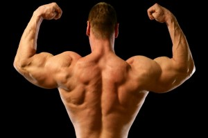 Bicep Muscles For Bodybuilders