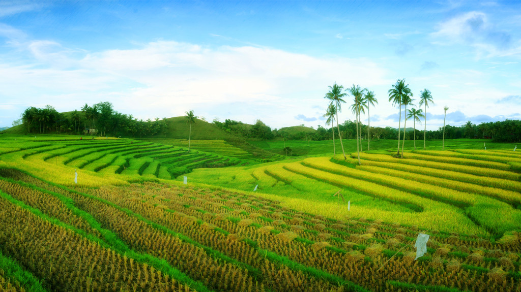 cadapdapan rice terraces