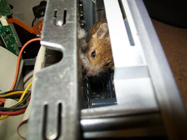 Mouse Inside A Pc Case Boing Boing