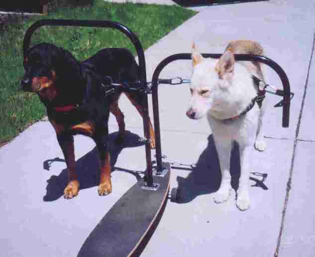 skateboard2dogfrontdogs_68a5.jpg