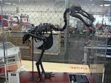 dodo-bird1.jpg