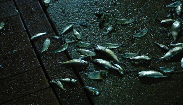 fishkill.jpg