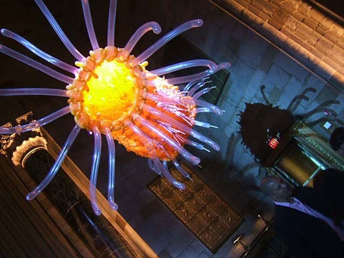 Honeysuckle Images Honeysuckle 0002 W