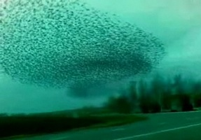 Birdsssssformmm