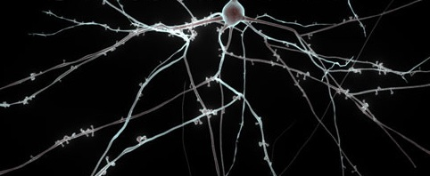 Neuronnnnn
