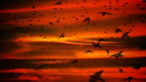 Plaidbirdssss