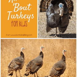 All About Turkeys: A Turkey Roundup of Food, Activities, and More for Kids