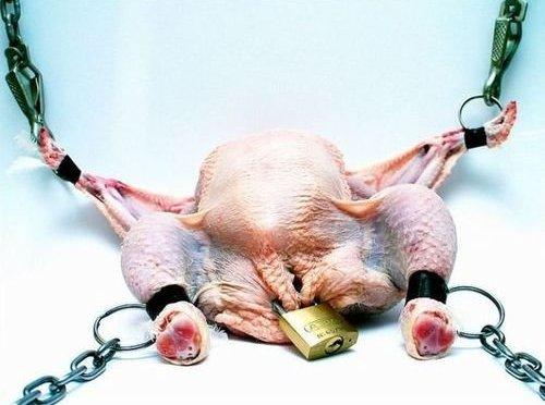 bondage chicken