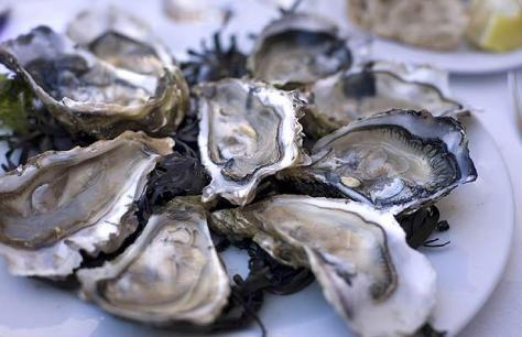 Oysters_1736421i