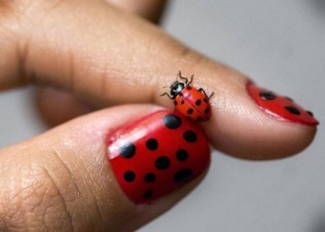 lady-bug-nail-art-416053-475-339_large