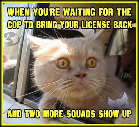 Cat and cops