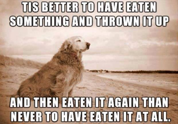 Dogs eating bad things