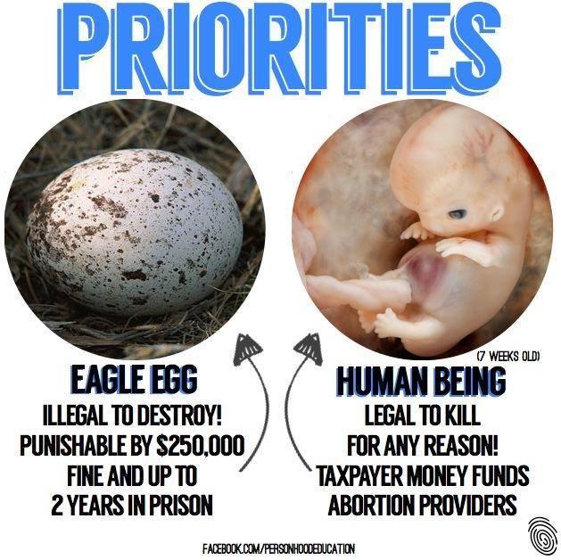 Eagle egg versus fetus