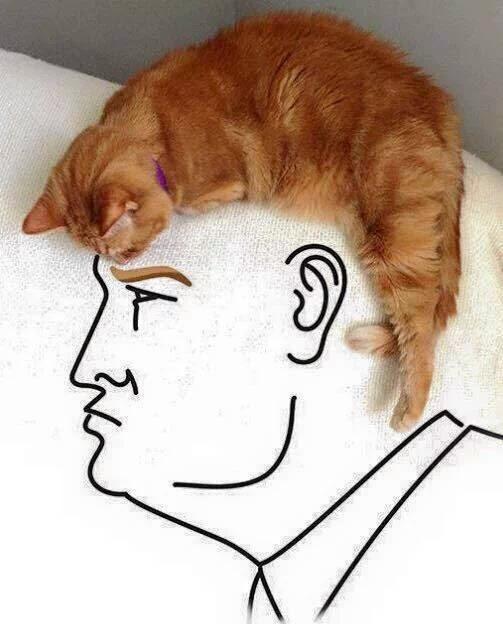 Donald Trump's cat hair