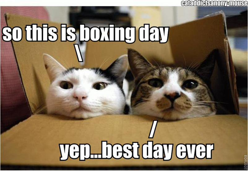 Boxing day and cats