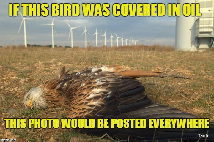 Dead bird wind farm not oil