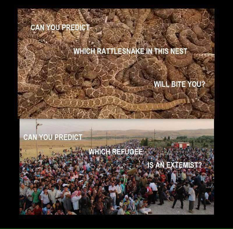 Rattlesnakes and refugees