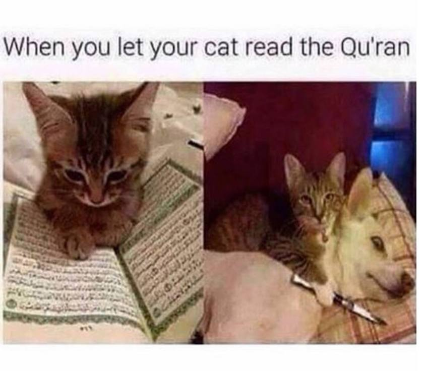 Cat and Koran