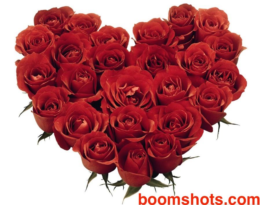 RoseHeartBoomshots