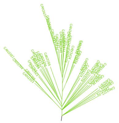 Aussie_Genetic_Tree