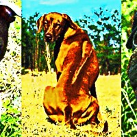 Dogs Defined by Disease