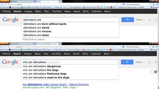 google_dalmatian_canada