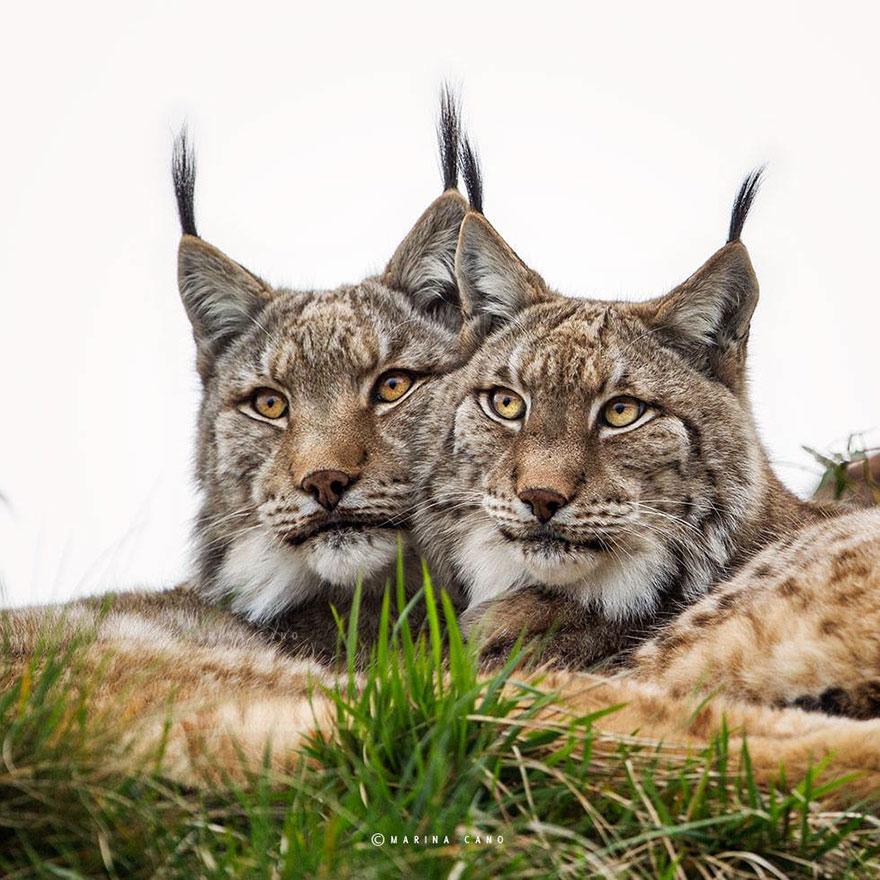 animal-wildlife-photography-marina-cano-10