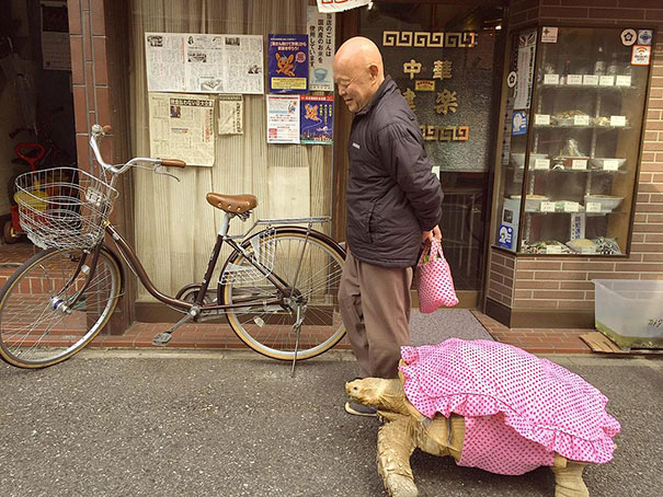 anciano-paseando-tortuga-sulcata-tokio-japon (2)