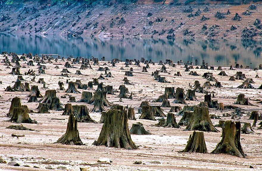 contaminacion-planeta-sobredesarrollo-sobrepoblacion-exceso (10)