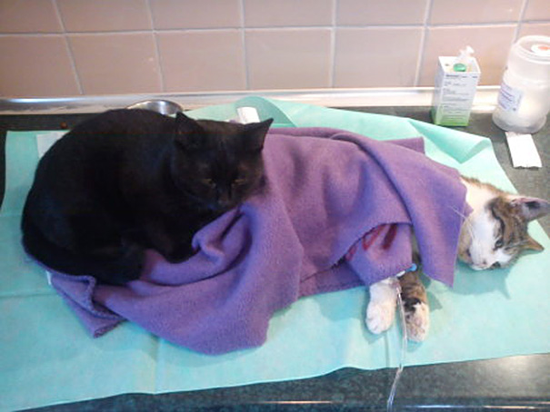 gato-enfermero-veterinario-refugio-animales-radamenes-polonia (3)