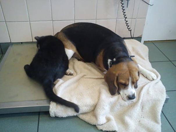 gato-enfermero-veterinario-refugio-animales-radamenes-polonia (8)