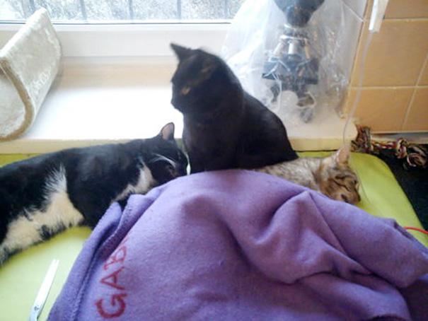 gato-enfermero-veterinario-refugio-animales-radamenes-polonia (9)