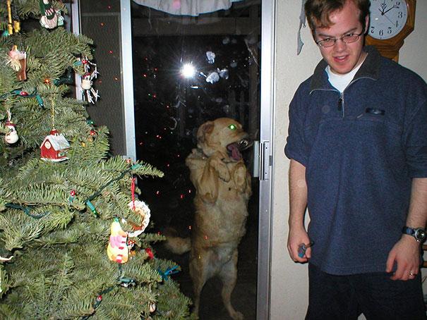 animales-pidiendo-entrar (19)