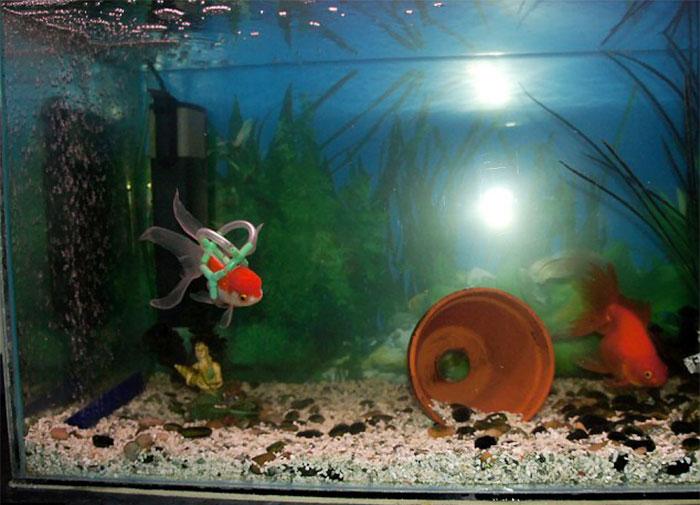 flotador-corcho-silla-ruedas-peces (2)