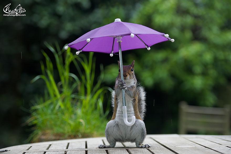 fotos-ardilla-paraguas-lluvia-max-ellis (5)