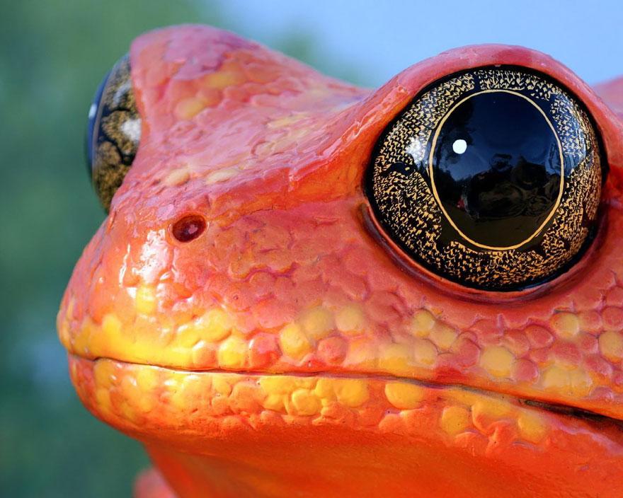 fotos-curiosas-ranas-anfibios (13)
