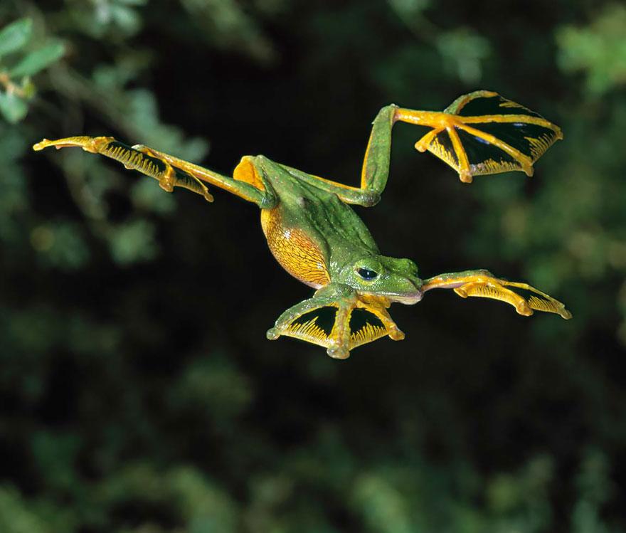 fotos-curiosas-ranas-anfibios (14)