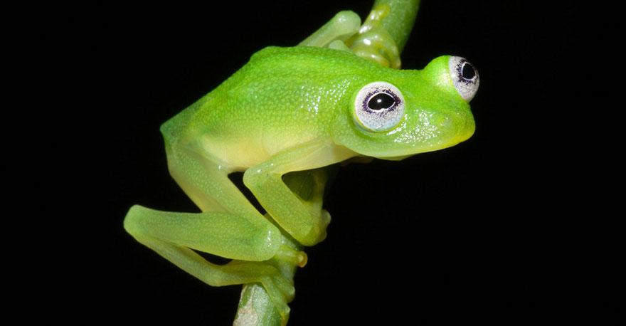 fotos-curiosas-ranas-anfibios (31)