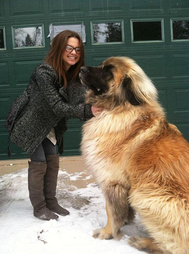 fotos-divertidas-perros-gigantes (17)