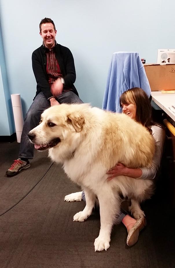fotos-divertidas-perros-gigantes (5)